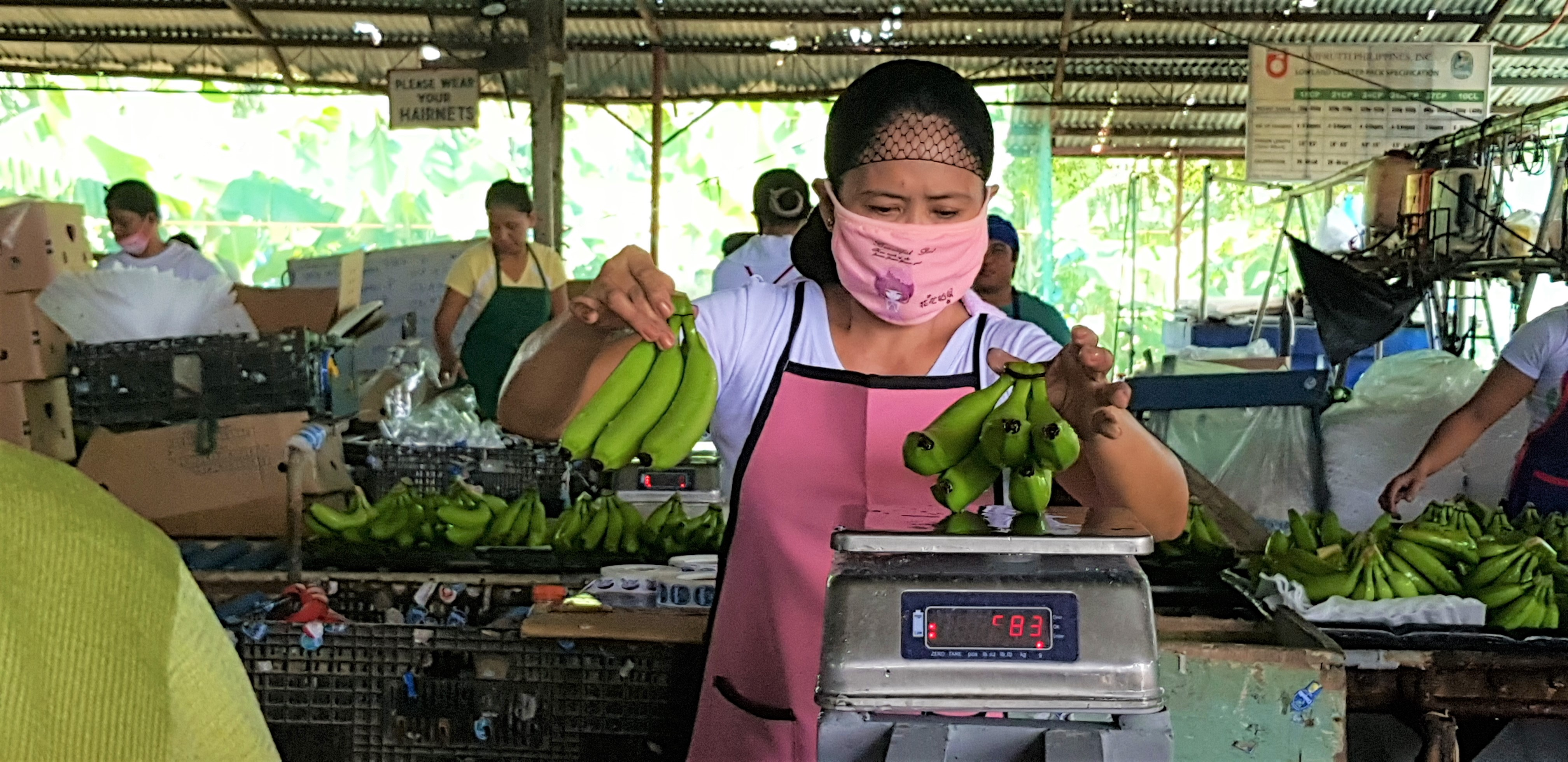 A worker weighs bananas in a packing plant in Davao de Oro. Most women in the banana farming industry work in these plants, handling hundreds of bananas per day.