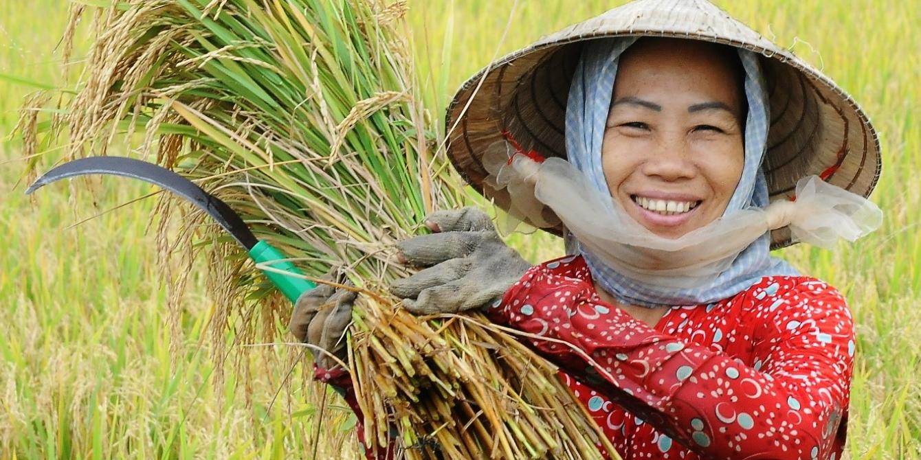 How Vietnamese smallholders overcame a twofold crisis