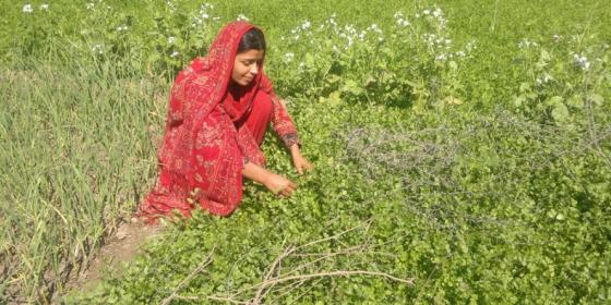 Oxfam in Asia - Pakistan - Hakim Mai, An Inspiring Climate Change Fighter
