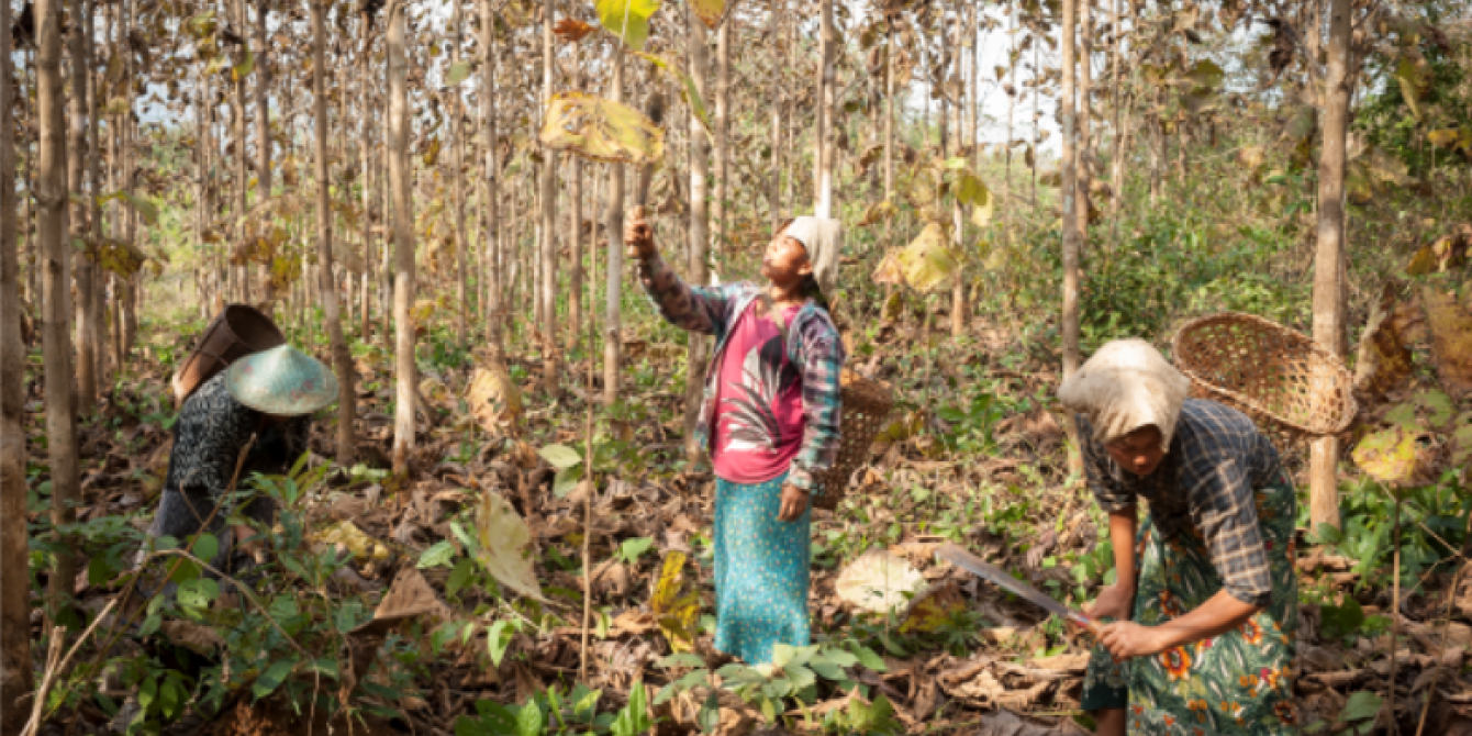Local Women in Community Forest in Kachin state