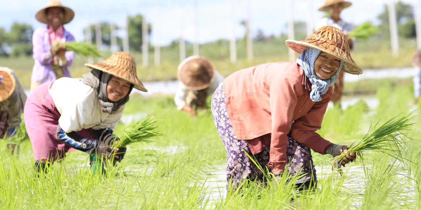 Women farmers are planting rice during the monsoon season in Myanmar's Dryzone, Photo by: Hein Latt Aung/ Oxfam