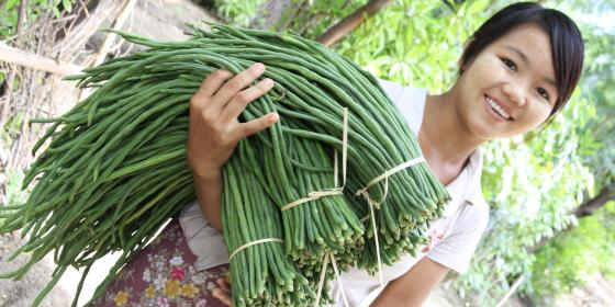 Young woman from Myanmar's central dryzone holding long beans. Photo by: Hein Latt Aung/ Oxfam