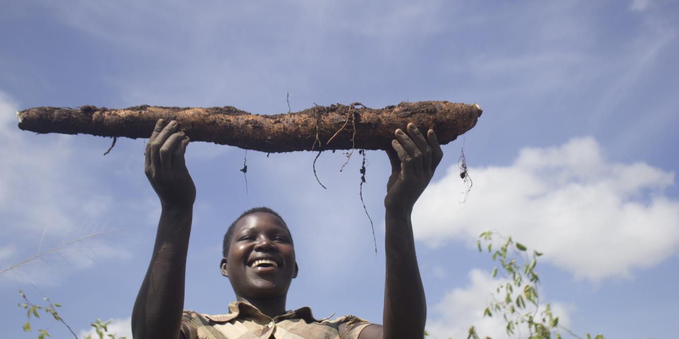 The cassava project project focuses on cassava, one of the most important staple crops in Northern Uganda. Photo credit:Oxfam