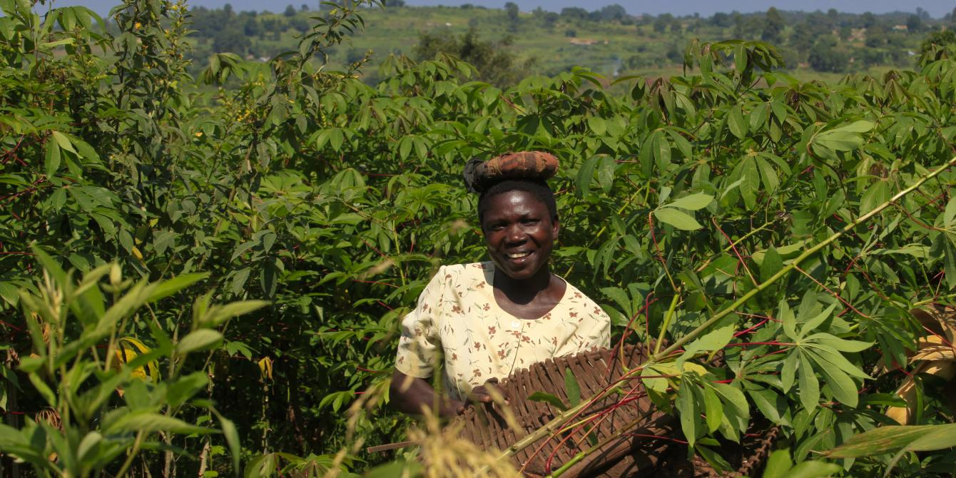 Zawadi Esther harvesting cassava on her farm in Tiapi village, Ayavu Parish. The mother of five children supports her family with farming.