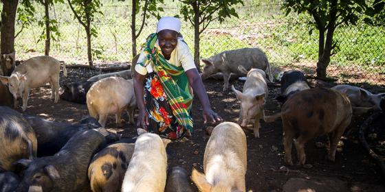 Joseph and Maria taking care of their pigs
