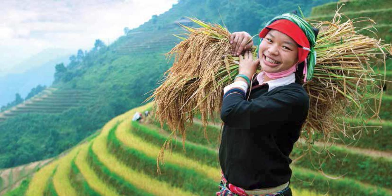 Ethnic minority woman harvests crops in Ninh Binh. Credit: Oxfam Vietnam