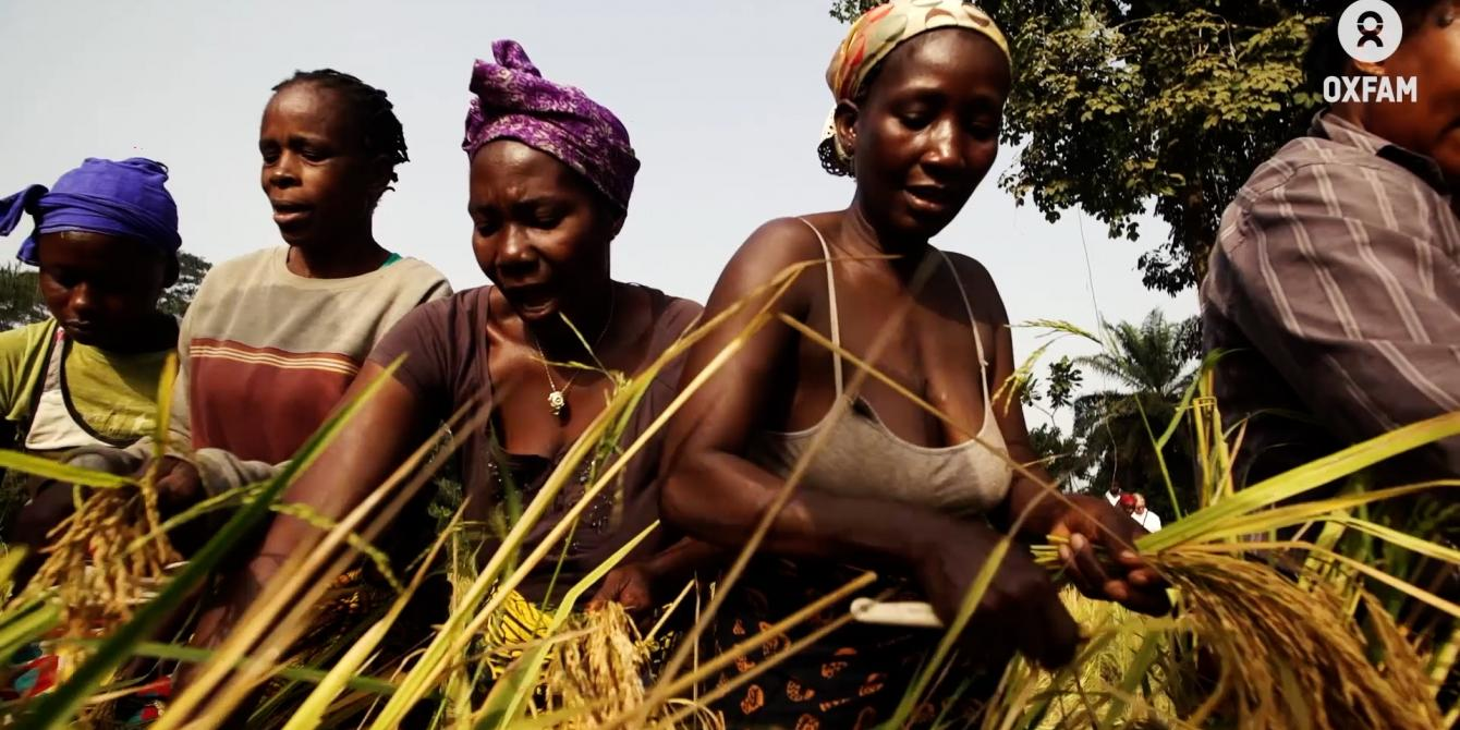 Women farmers in Liberia harvest wheat while singing and receive fair wages for their work.